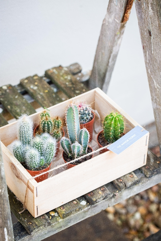 Set of Cacti