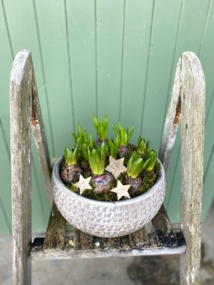 Large Hyacinth Planter