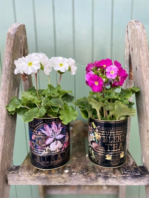 Plants in Floral Tins