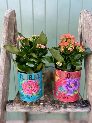 Plants in Tropical Tins